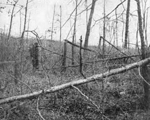 The forbidding Wilderness battlefield. (Miller's Photo History)
